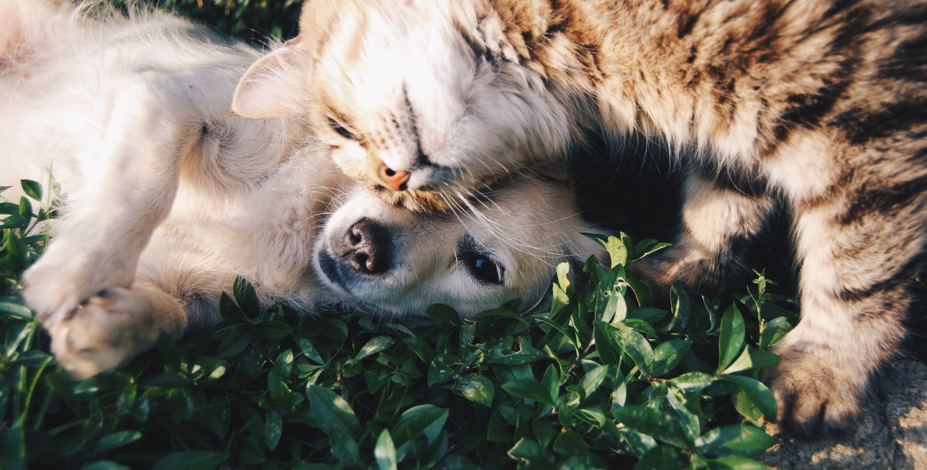 dogs make better companions than cats